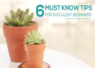 Everything To Know About Succulents - letsaskme
