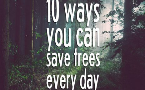 How To Save Trees 6 Beautiful Ways To Preserve Trees