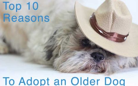 TOP 10 REASONS TO ADOPT A DOG