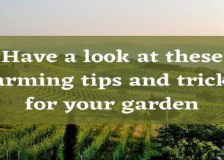 agriculture guest post | Farming tips blog post - letsaskme