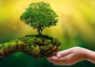 Nature importance guest post | Nature blogger