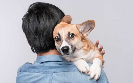 Top 6 Things To Know When Having Pets At Home