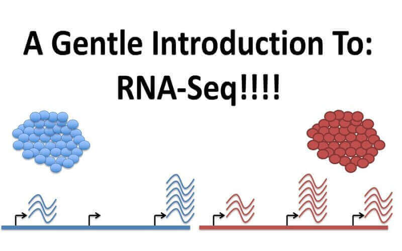 RNA Sequencing – Principle, Methods And Applications On How This Medical Introduction Is Saving Lives
