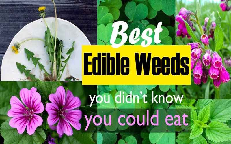 Top 10 Edible Flower That You Can Eat