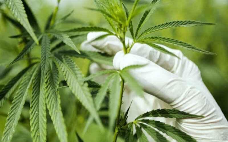 Medical Marijuana in Oklahoma