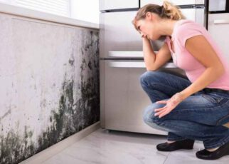 Reasons for Using a Professional Mold Remediation Service